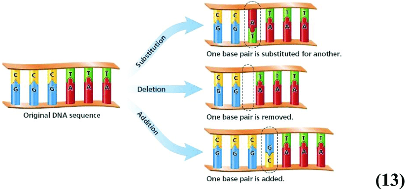 3-shows-a-graphic-demonstration-of-substitution-and-both-addition-and-deletion-mutations.png