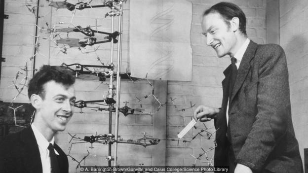 James Watson and Francis Crick with their model of DNA (Credit: A. Barrington-Brown/Gonville and Caius College/Science Photo Library)