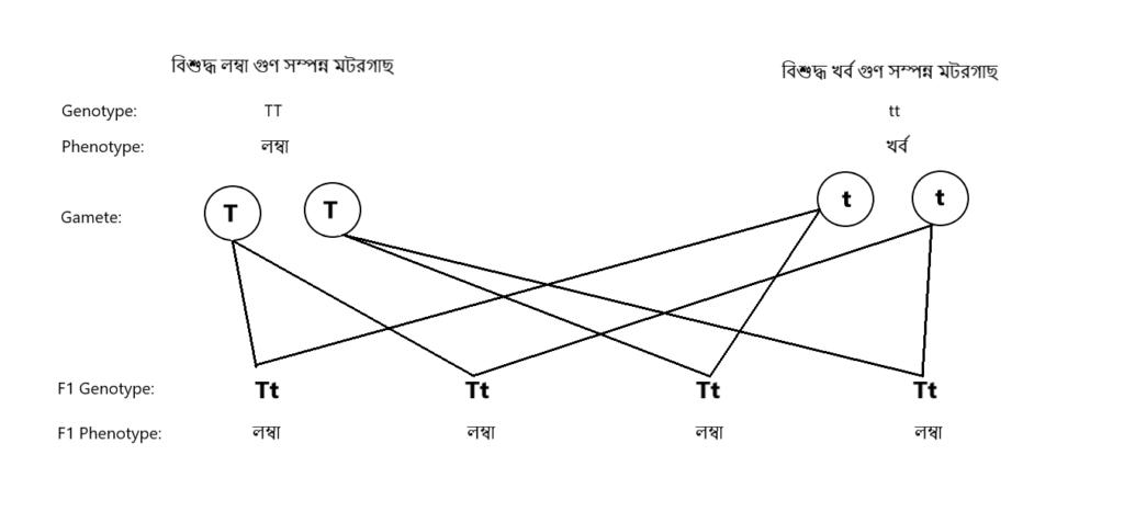 Figure 3 প্রথম প্রজন্মের পর ফলাফল